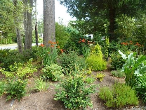 a woodsy garden