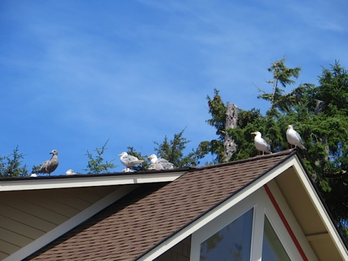 As we arrived, we had an audience from the neighbour's roof.