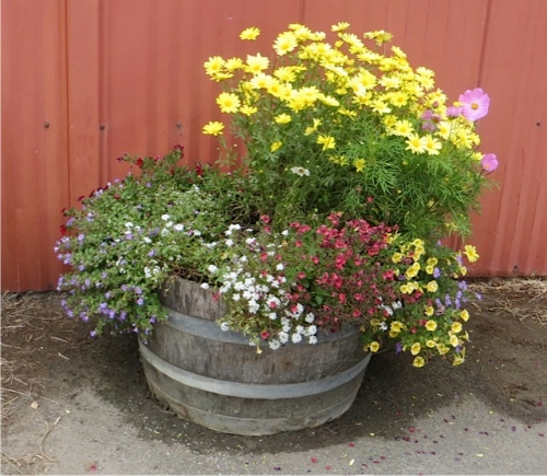 The planter by the south door (protected from north wind) looks the best, as usual.