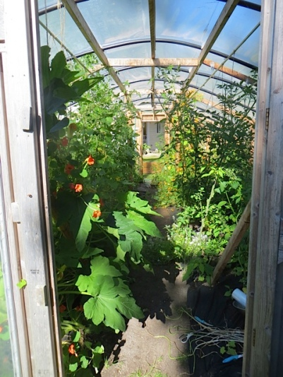 inside the big polytunnel