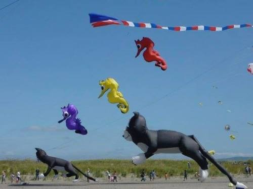 the cat kites in 2009.  Later in this week, there was enough wind to launch them.