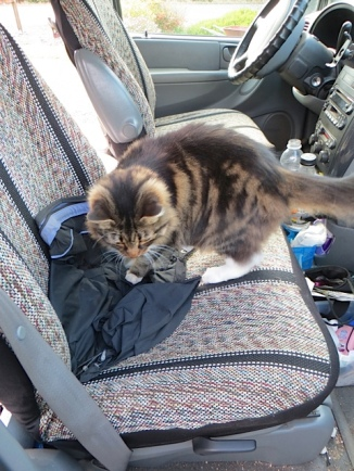 One of the two cats almost hitched a ride with us.