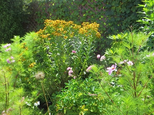 Helenium and Cosmos at the Depot