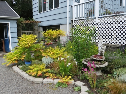 the driveway garden....I am going to snag me some more of that Tiger Eyes sumac this fall!