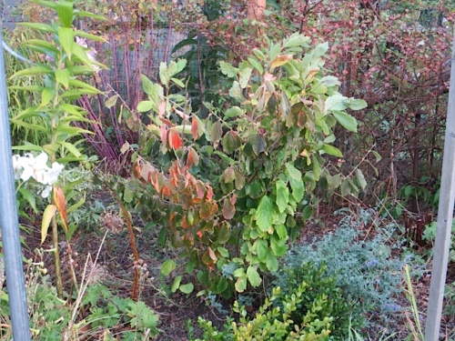 The garden looks prematurely dry and autumnal.