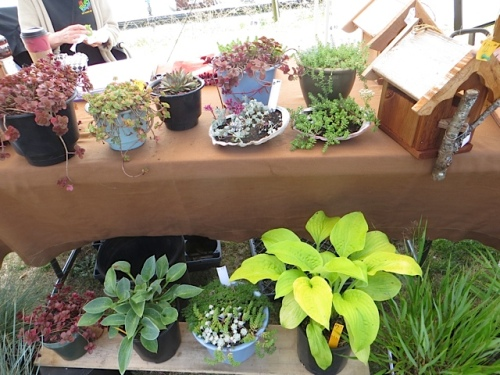 plants from The English Nursery