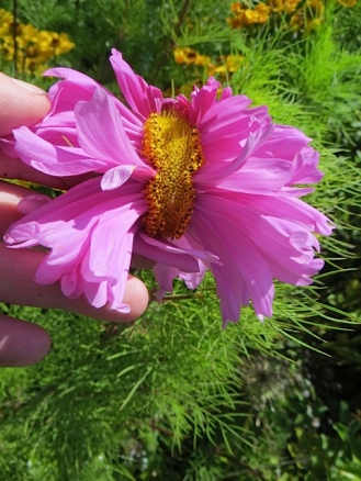 and a weird flower