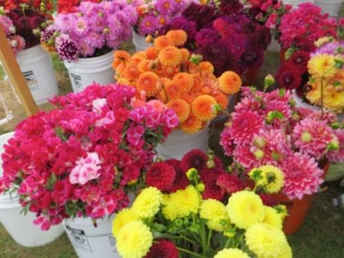 Mountain View Farm flower vendor