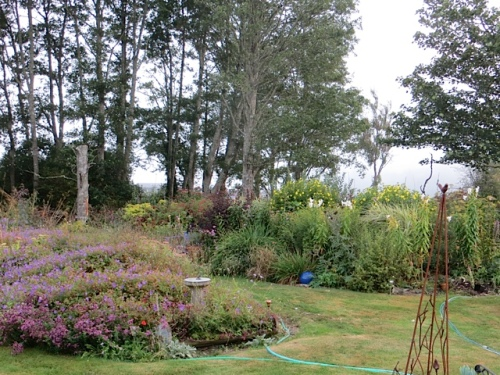 a last garden look with fog obscuring the hill southwest of us
