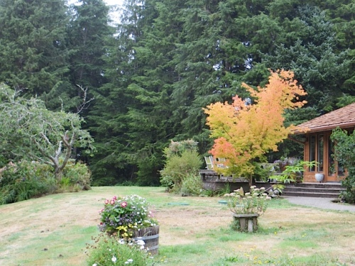 The maple by the front porch is the front garden's best feature.
