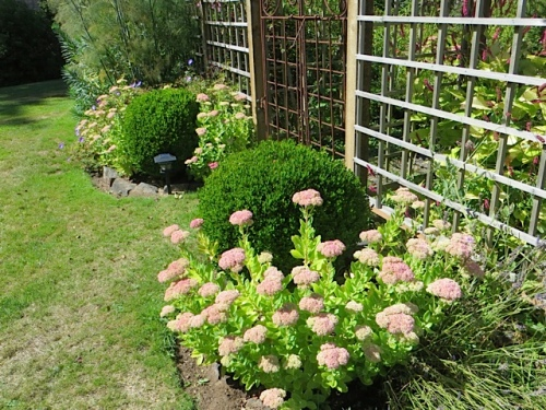 south gate with Sedum 'Autumn Joy' and boxwood