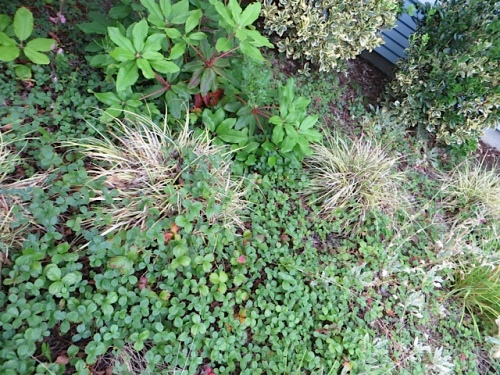 Carex, I suppose, and very unsightly