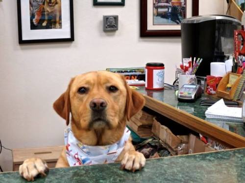shop dog Scout at the counter