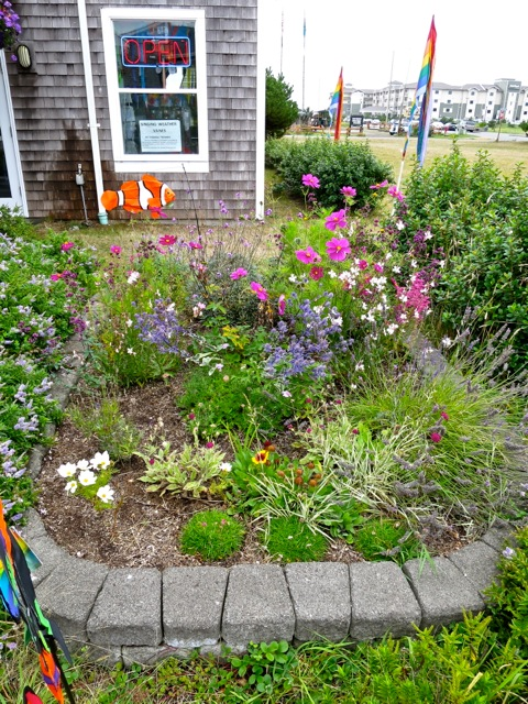 our wee garden at the kite museum got tidied
