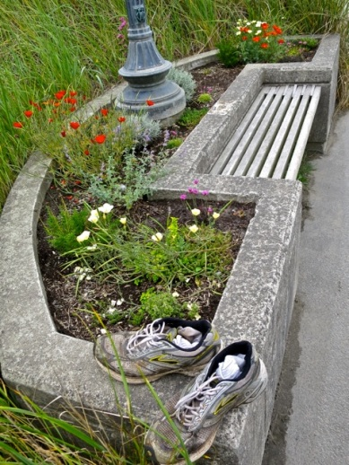 the ones re planted with drought tolerant plants are doing better (Allan's photo, not Allan's shoes)