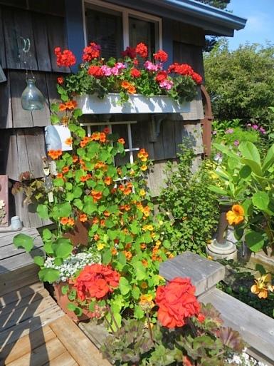 Jo's garden, east wall of house