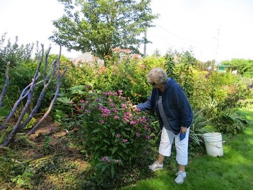 Jo will have pink turtlehead in her garden next year!