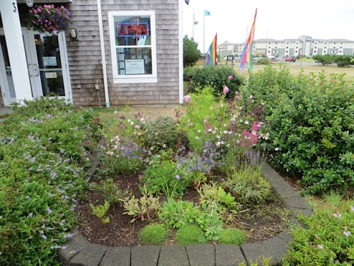 our tiny pocket garden at World Kite Museum