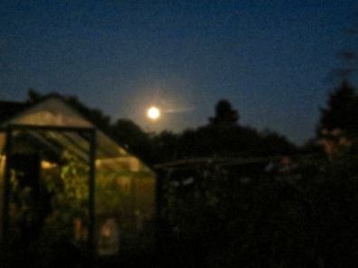 over the greenhouse...