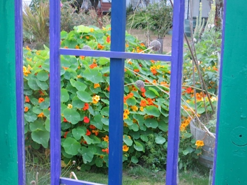 and nasturtiums outside the west gate