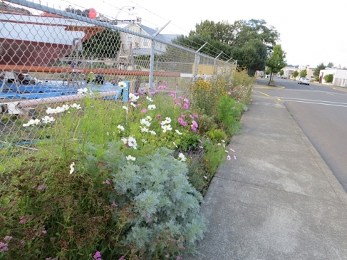 north end of boatyard garden