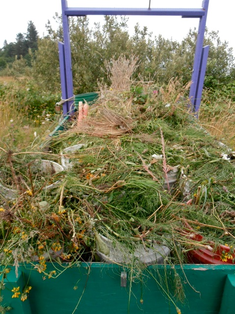 and ended up with this large load of weeds to dump at the east end of the marina.