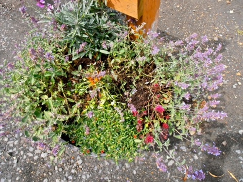 """planter by the entrance gate; Allan thought it looks a little """"mushy"""""""
