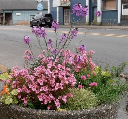 same planter, different angle