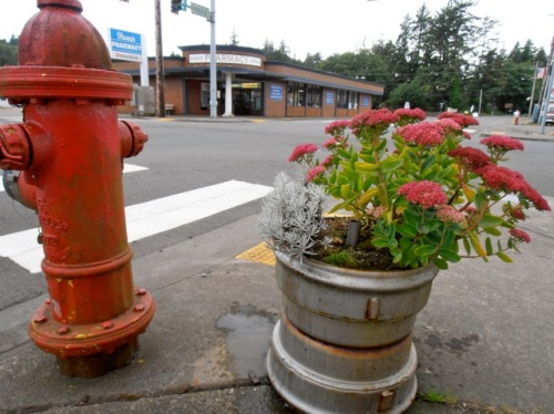 Antique store that used to be here planted the Sedum in an old truck wheel
