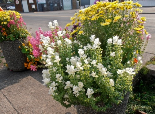 I had asked Allan to photograph the city hall planters, and he certainly obliged.