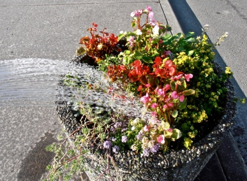 the planter with the new free begonias