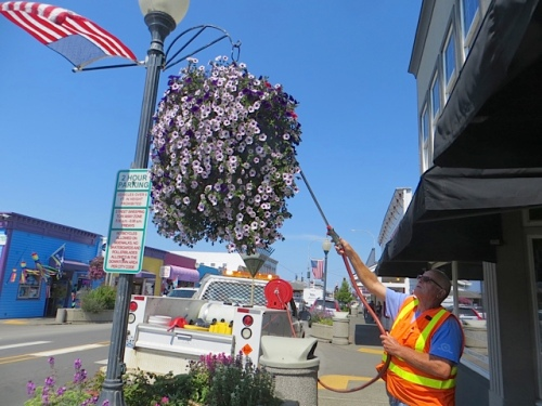 how the hanging baskets get watered