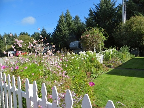 picket fence garden with lots of white phlox; I can get some for Golden Sands from here.