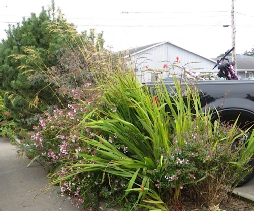 by where we were parked, one of the parking lot gardens looking rather good