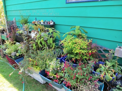 I have ALL these plants to plant, but the weather is too dry now.