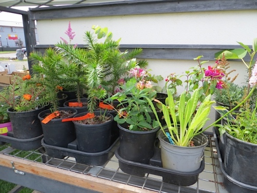 plants for sale, too