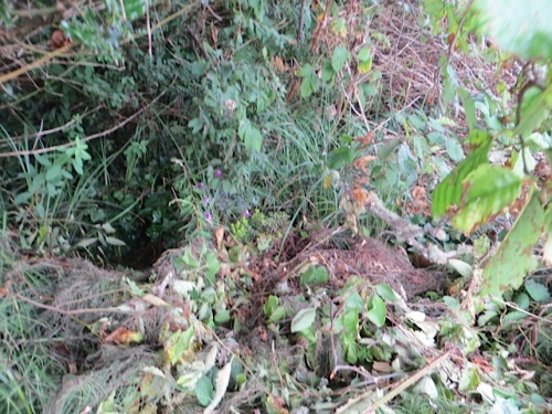 The plants were all thrown in a pile far back in the blackberry and brush lot next to the planter.