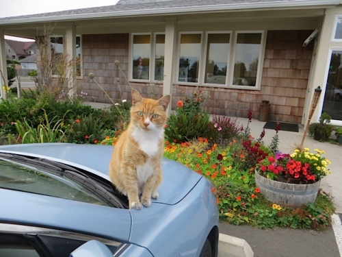Parking Lot Cat was glad to see us!