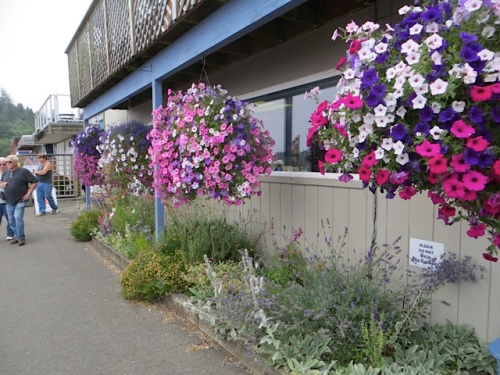 our port office garden with hanging baskets from The Basket Case Greenhouse