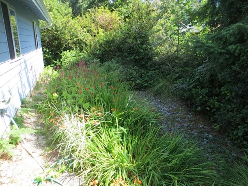 a peek at the swale garden to the east of the porch (north side of house)