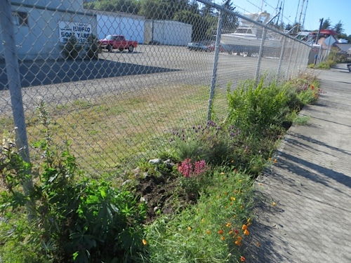 boatyard: battering out oodles of creeping sorrel and horsetail