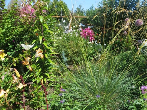 no before photos to prove that this area was a mass of weeds, especially dwarf fireweed