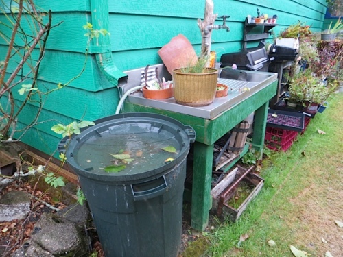 The rainwater barrels were all overflowing except for the gutter one.