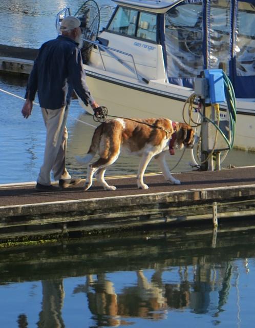 She's a boat dog.