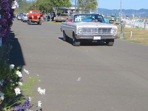 My white cosmos in the port office garden port office garden and a white car.