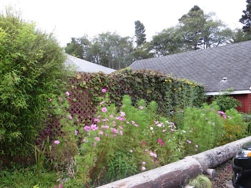 Depot Restaurant garden