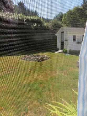 screened window view of back yard fire circle