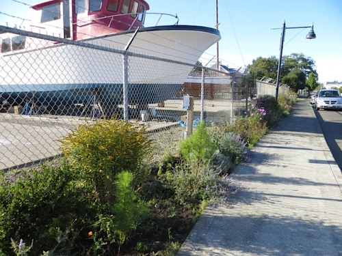 the garden side of the boatyard fence