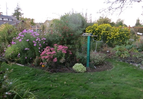 garden in evening light