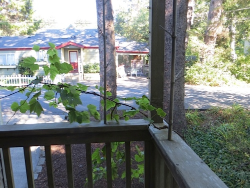 grape vine growing on back deck